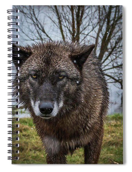 Wet Wolf Spiral Notebook