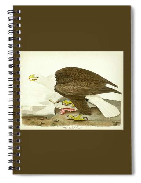 White-headed Eagle Spiral Notebook