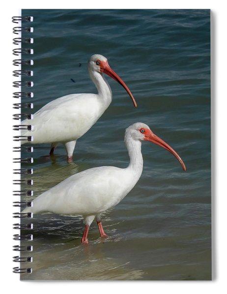White Ibis Pair Spiral Notebook