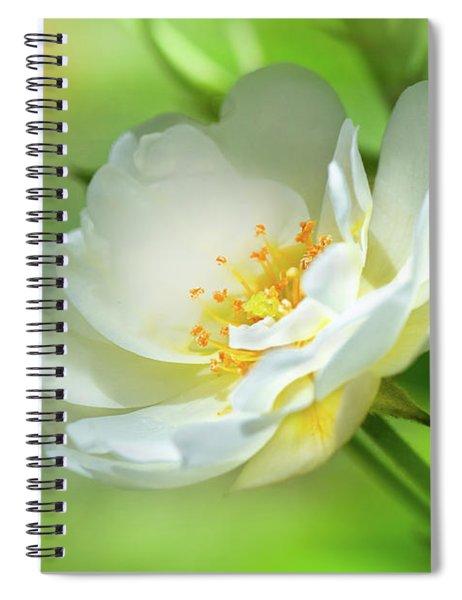 White Iceberg Rose Spiral Notebook
