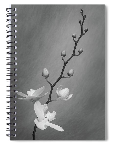 White Orchid Buds Spiral Notebook