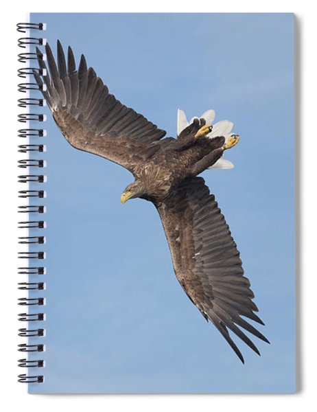White-tailed Eagle Against A Blue Sky Spiral Notebook
