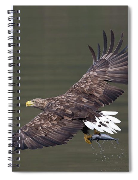White-tailed Eagle Against Dark Water Spiral Notebook