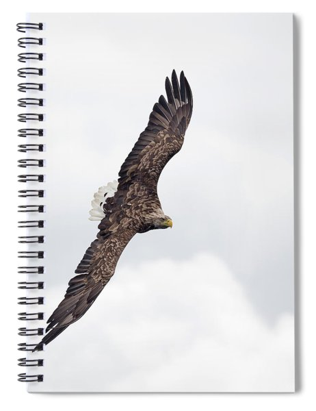 White-tailed Eagle Against White Clouds Spiral Notebook