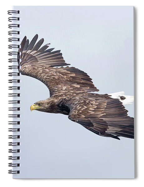 White-tailed Eagle Approaching Spiral Notebook