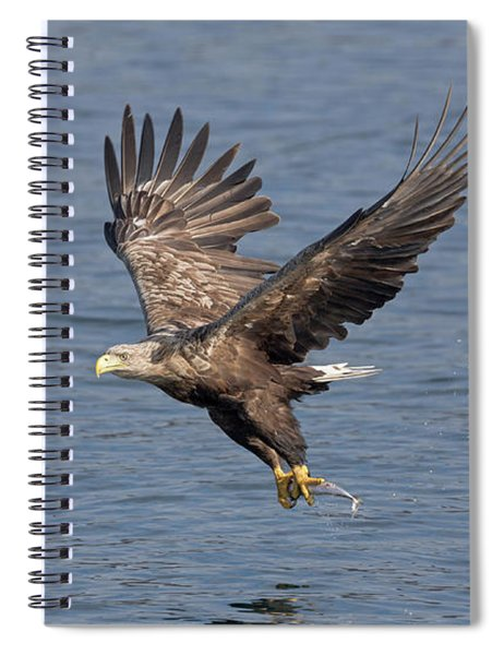 White-tailed Eagle Carries Fish Spiral Notebook