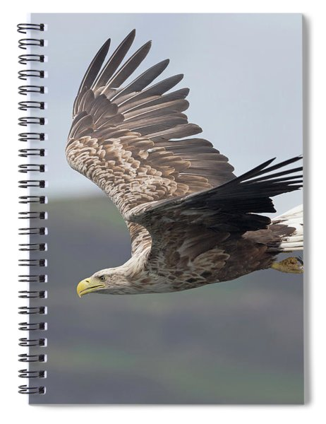 White-tailed Eagle Descends Spiral Notebook
