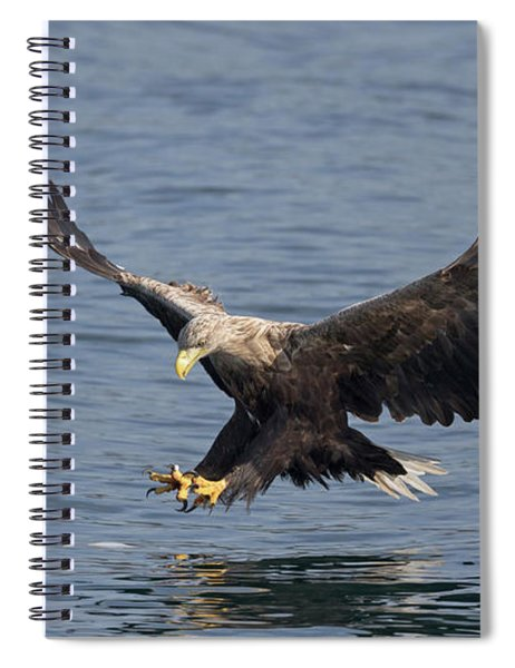 White-tailed Eagle Hunting Spiral Notebook