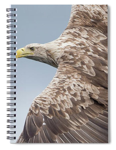 White-tailed Eagle Side On Spiral Notebook