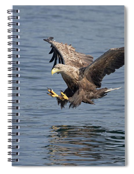 White-tailed Eagle Taking A Fish Spiral Notebook