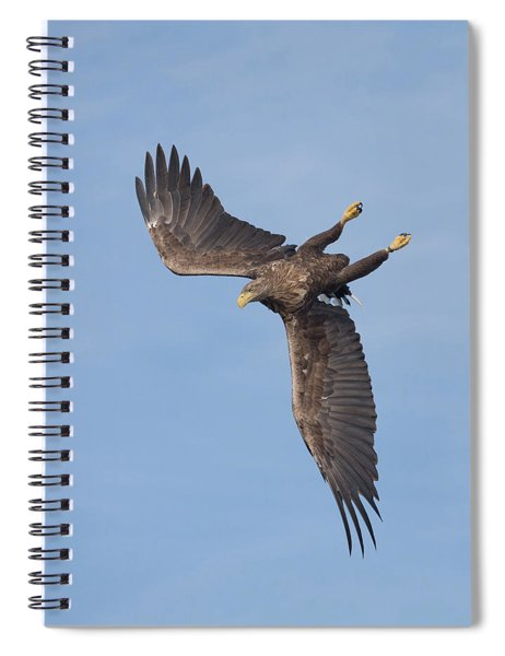 White-tailed Eagle Turns Spiral Notebook