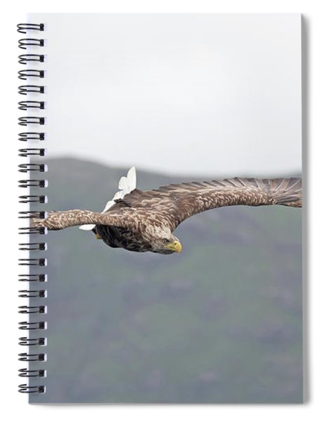 White-tailed Eagle Twisting Tail Spiral Notebook
