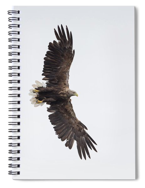 White-tailed Eagle Wingspan Spiral Notebook