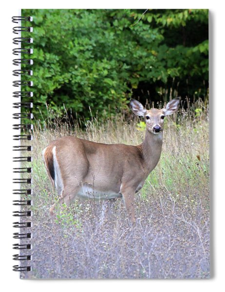 White Tale Deer Spiral Notebook
