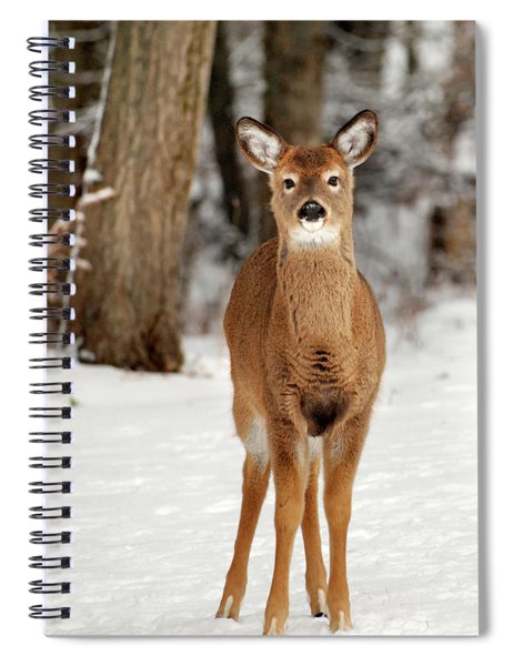 Whitetail In Snow Spiral Notebook