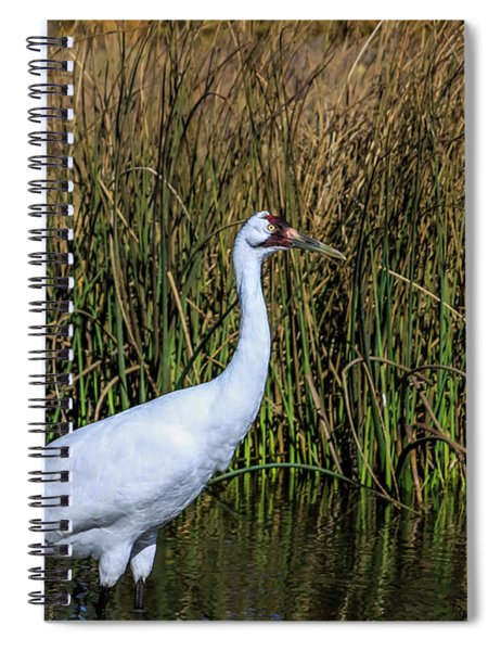 Whooping Crane In Pond Spiral Notebook