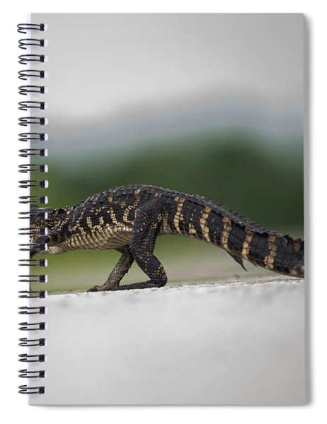 Why Did The Gator Cross The Road? Spiral Notebook