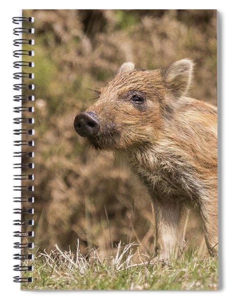 Wild Boar Humbug Spiral Notebook