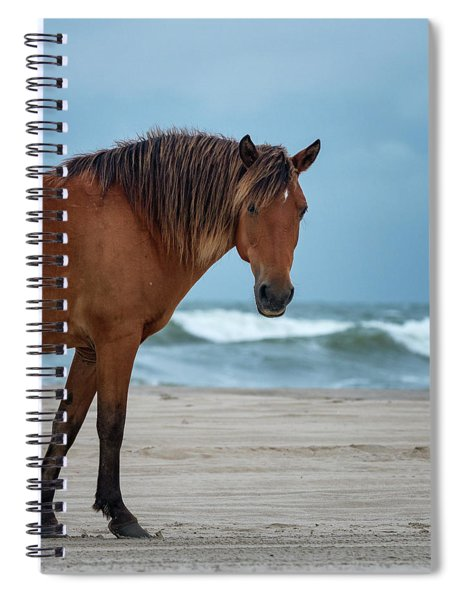 Wild Colonial Spanish Mustang Of Carova Stormy Skies Spiral Notebook