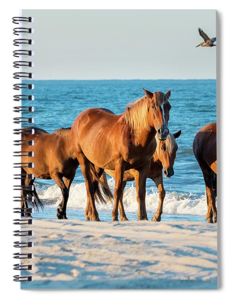 Wild Colonial Spanish Mustangs Of Carova Spiral Notebook