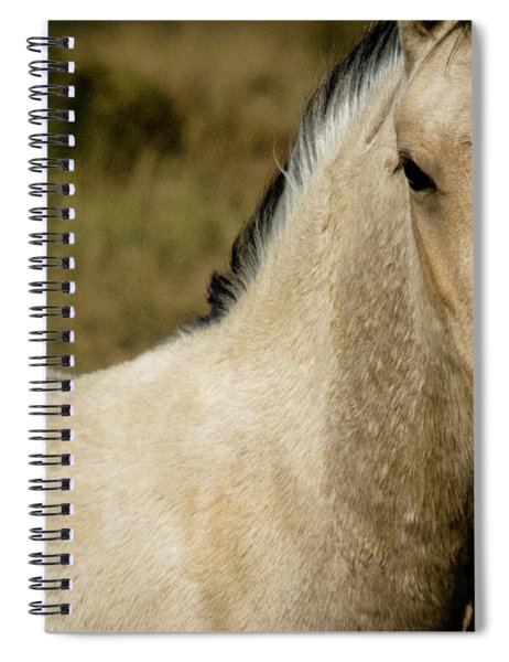 Wild Mustangs Of New Mexico 5 Spiral Notebook