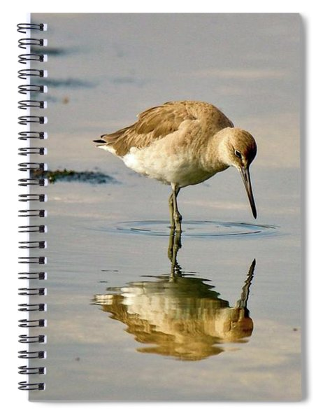 Willet Sees Its Reflection Spiral Notebook