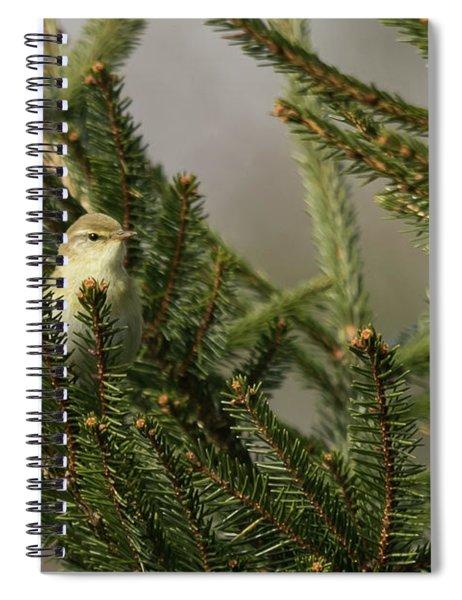 Willow Warbler Spiral Notebook