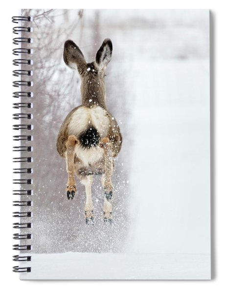 Winter Bounce Spiral Notebook