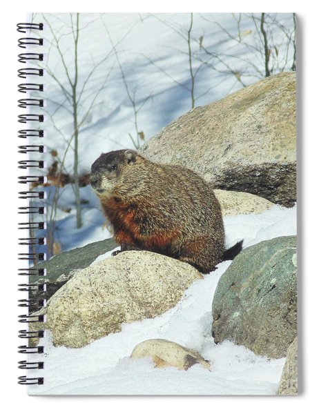 Winter Groundhog Spiral Notebook