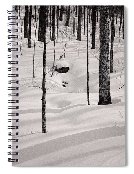 Winter Light In The Forest Spiral Notebook