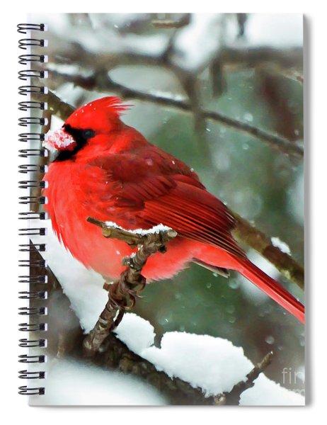 Winter Red Bird - Male Northern Cardinal With A Snow Beak Spiral Notebook