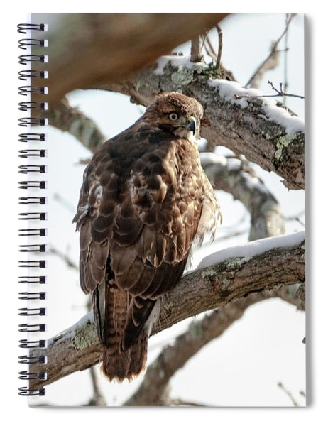 Winter Red-tailed Hawk Spiral Notebook