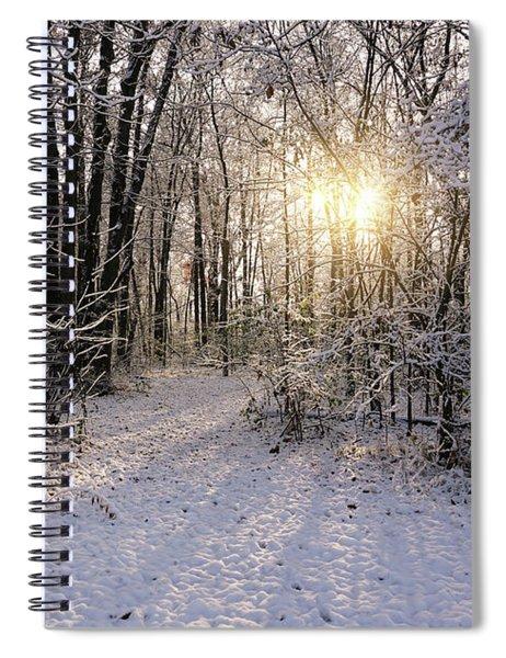 Winter Woods Sunlight Spiral Notebook