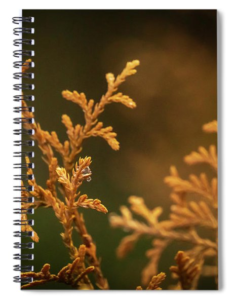 Winter's Hedges Spiral Notebook
