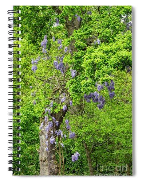 Wisteria And Oak Spiral Notebook