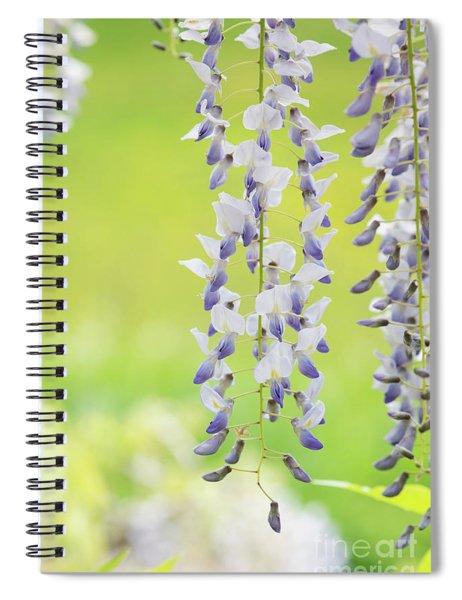 Wisteria Floribunda Multijuga Flowers Spiral Notebook