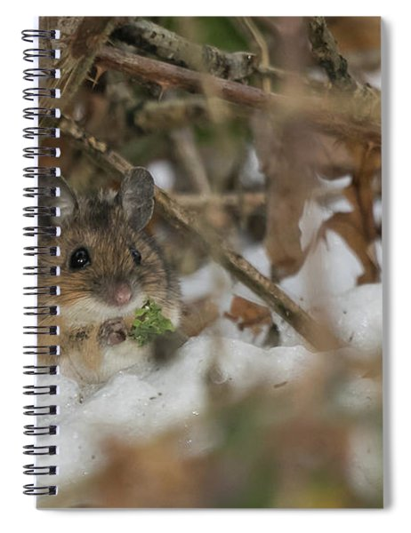 Wood Mouse Spiral Notebook