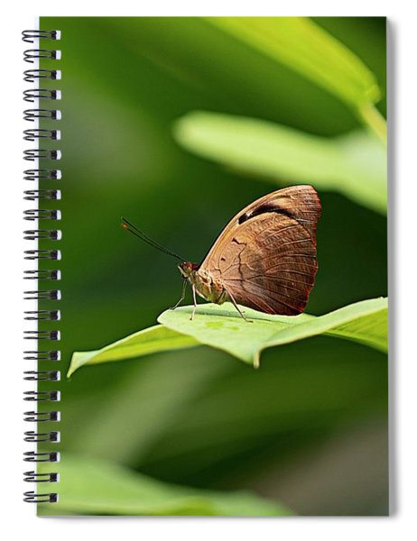 Wrapped In Green Spiral Notebook
