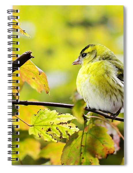 Yellow Bird Spiral Notebook