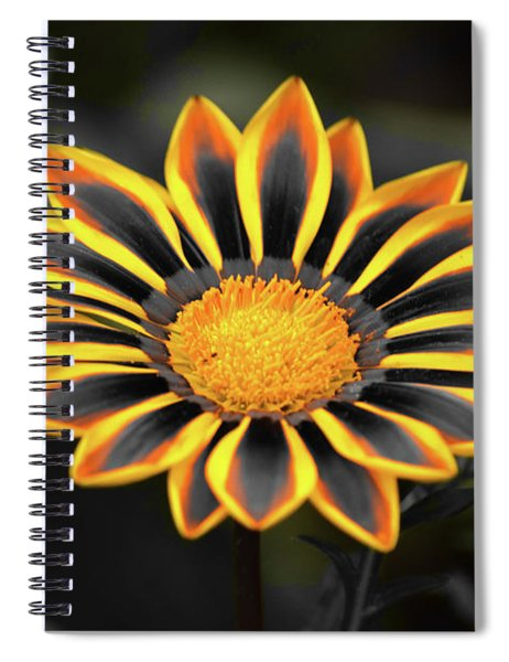 Spiral Notebook featuring the photograph Yellow Edged Gazania by Patti Whitten