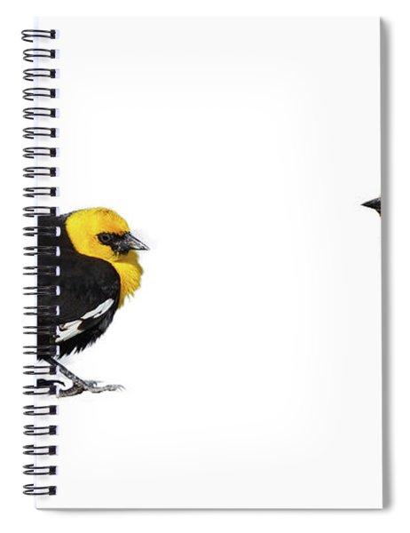 Yellow Headed Blackbird  Spiral Notebook