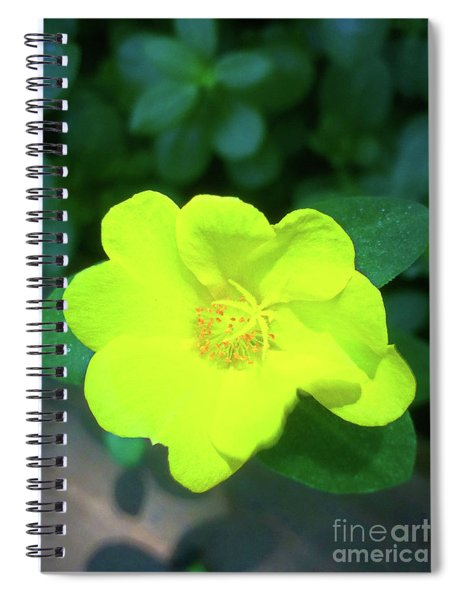 Yellow Hypericum - St Johns Wort Spiral Notebook