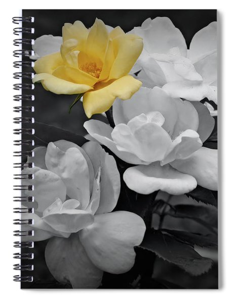 Yellow Rose Cluster Partial Color Spiral Notebook
