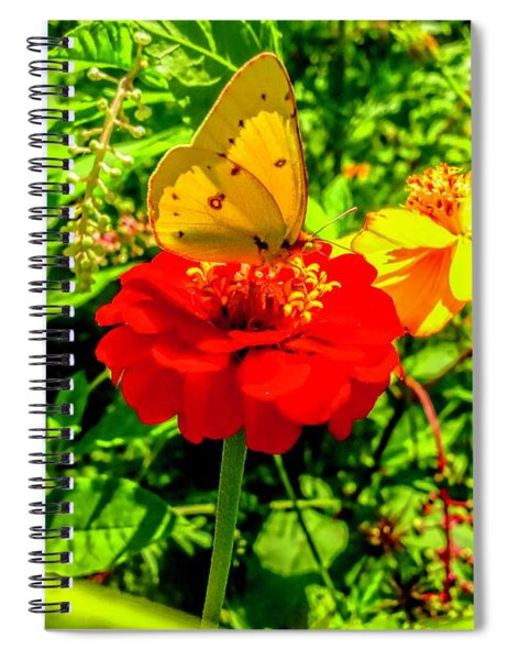 Yellow Sulfur Butterfly Spiral Notebook