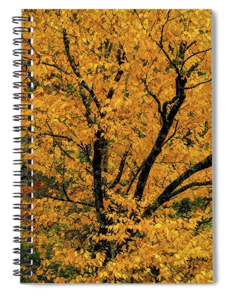 Yellow Tree Leaf Brilliance  Spiral Notebook