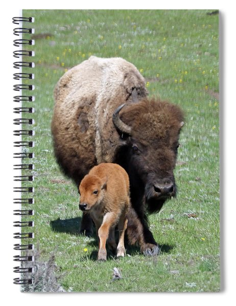 Yellowstone Bison And Calf Spiral Notebook