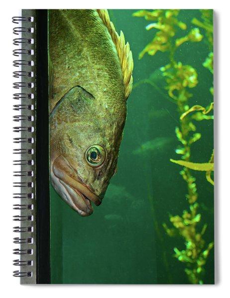 Yellowtail Rockfish Playing Peekaboo Spiral Notebook