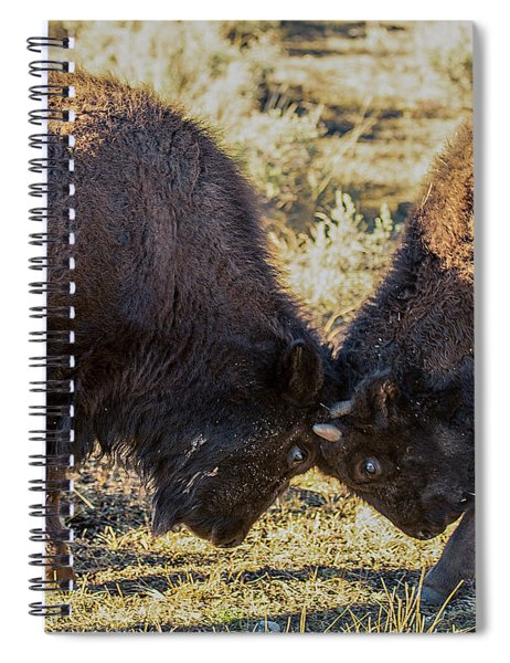 Young Bison Spiral Notebook