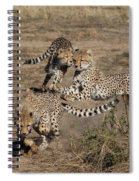 Young Cheetahs Spiral Notebook