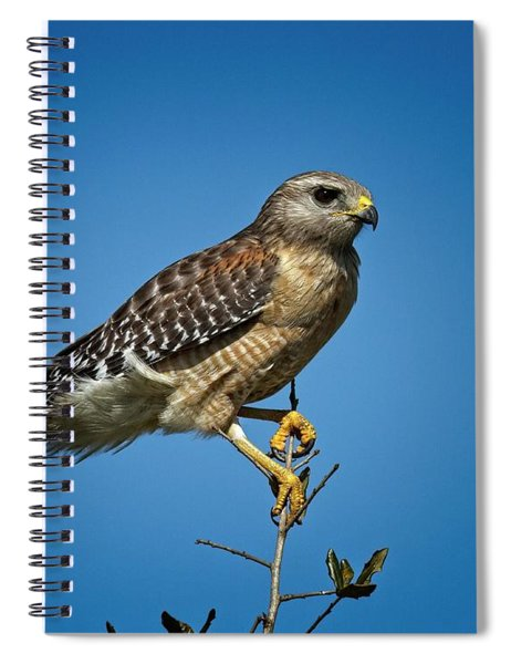 Young Cooper's Hawk Spiral Notebook